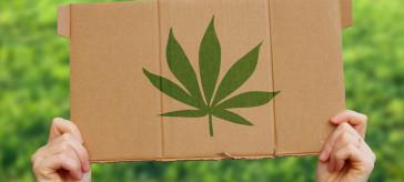 【トレンド】大麻由来成分CBD ― 思わぬ効用で徐々に浸透