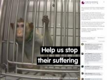 【ドイツ】犬、猫、猿などに「暴力的な」動物実験…「犬は殺されるために檻から出されても尻尾を振っていた」