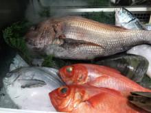 【漁業】ヒラメ4割安、マダイ3分の1に 愛知の高級魚ピンチ